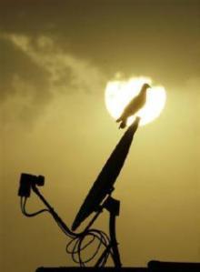 bird on dish antenna