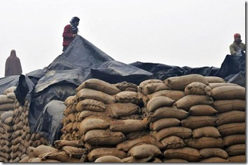 No godowns for food grains