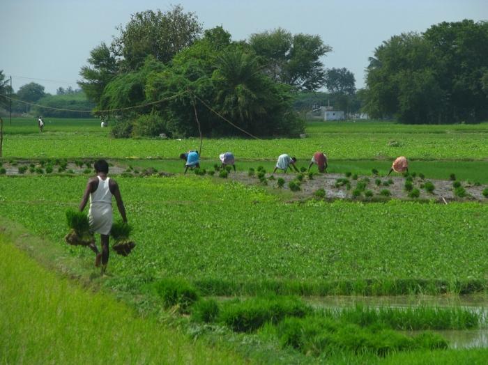 Agri Fieldworks