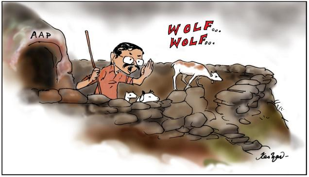 AAP's wolf