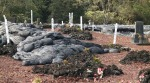 15 Pahoa cemetry covered by Lava