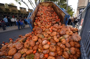 01 Pumpkins dumped on Avignon roads