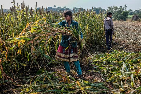 Indian agri